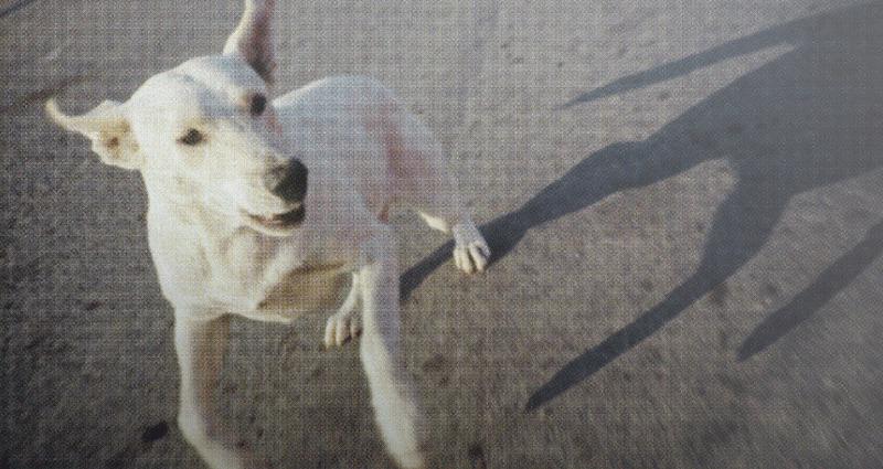 Exposición fotográfica sobre perros en México | elPulpo agenda